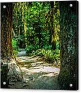 Pathway Cathedral Grove Acrylic Print