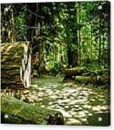 A Walk Among The Giants Collection 3 Acrylic Print