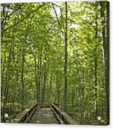 A Walk In Nature.  Acrylic Print