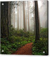 A Walk In The Fog Acrylic Print