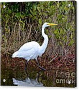 A Walk In The Wetlands Acrylic Print
