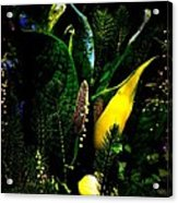 A Walk In The Woods 4 Acrylic Print