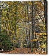 A Walk In The Woods II Acrylic Print