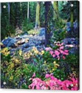 A Walk In The #woods On #fall Acrylic Print
