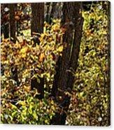 A Walk Through The Woods - 1 Acrylic Print