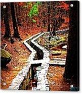 A Walk Through The Woods Acrylic Print