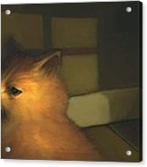 A Warm Corner For Kitty   No.2 Acrylic Print