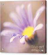 A Waterdrop On The Petal Of A Daisy Acrylic Print