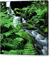 A Waterfall In Redwood National Park Acrylic Print