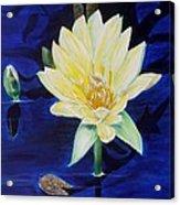 A Waterlily Acrylic Print