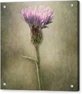 A Weed Is But A Flower In The Wrong Place.. Acrylic Print