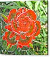 A West Coast Flower Acrylic Print