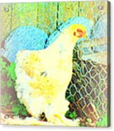 A Wet Hen In Its Own Little Paradise  Acrylic Print