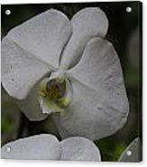 A White Orchid Flower Inside The National Orchid Acrylic Print