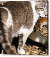 A Wild Cat Catching A Chipmunk Acrylic Print