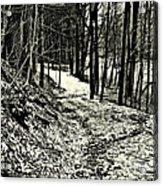 A Winter's Trail Acrylic Print