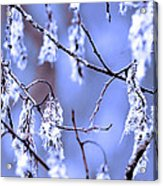 A Withered Branch Acrylic Print by Tommytechno Sweden
