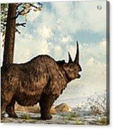 A Woolly Rhinoceros Trudges Acrylic Print by Daniel Eskridge