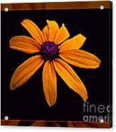 A Yellow Burst Of Sunshine Floral Photography Acrylic Print