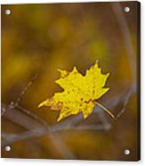 A Yellow One Acrylic Print