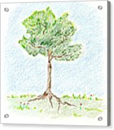 A Young Tree Acrylic Print