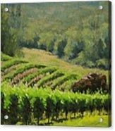 Abacela Vineyard Acrylic Print