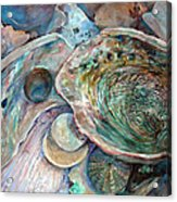 Abalone Grouping Acrylic Print