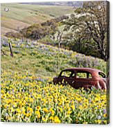 Abandoned Ford Buried In Wildflowers Acrylic Print