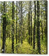 Abandoned Forest In Scott Arkansas Acrylic Print
