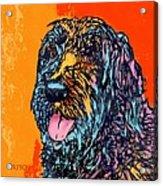 Abbey 2 Acrylic Print