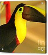 About A Beak  Acrylic Print