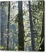Above The Firs Acrylic Print