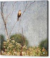 Above The Prairie II Acrylic Print