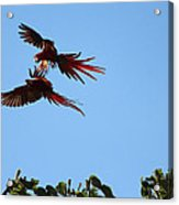 Above The Treetops Acrylic Print