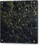 Abstract Background Of Tree At Night Acrylic Print