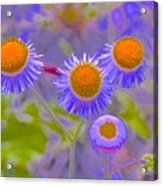 Abstract Blooms Acrylic Print