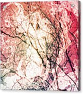 Abstract Branches Acrylic Print
