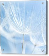 Abstract Dandelion Background Acrylic Print