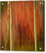 Abstract Fall 14 Acrylic Print