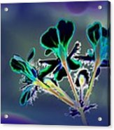 Abstract Flower - Digital Abstract Acrylic Print