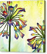 Abstract Flowers Acrylic Print by Diane Ferron