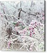 Abstract Ice Covered Shrubs Acrylic Print