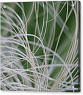 Abstract Image Of Tropical Green Palm Leaves  Acrylic Print