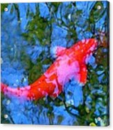 Abstract Koi 4 Acrylic Print