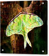 Abstract Luna Moth Painterly Acrylic Print