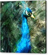 Abstract Marker Sketch Of Peacock Acrylic Print