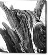 Abstract Of A Fallen Tree Root Acrylic Print