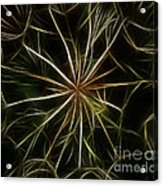 Abstract Of Nature 2 Acrylic Print