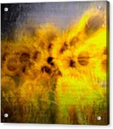 Abstract Of Sunflowers Acrylic Print