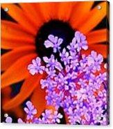 Abstract Orange And Purple Flower Acrylic Print